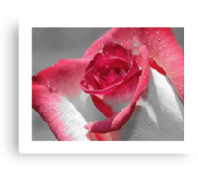 …is a Rose iPhone / Samsung Galaxy Case Canvas Print