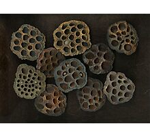 Lotus Pods Photographic Print