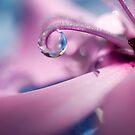 Crystal Butterfly by Jenni77