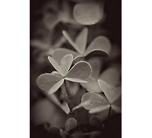 Clover Deconstructed Photographic Print