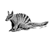 Numbat Sketch - Signed by Jodieq5