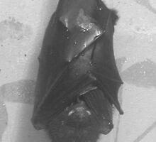 Bad Bat in Black! by karenuk1969