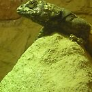 Lovely Lizard by karenuk1969