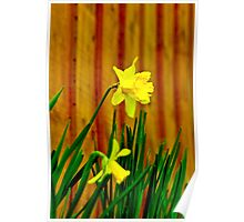 The Daffodils Poster