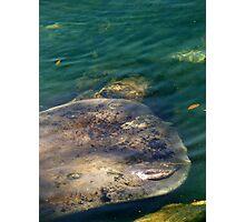 Mermaid Flapper Photographic Print