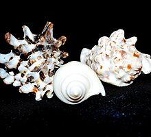 Sea Shell Beauty by Lynnrmorris