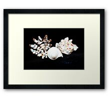 Sea Shell Beauty Framed Print