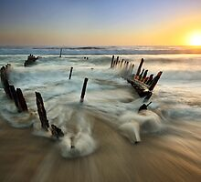Dicky Sunrise by Annette Blattman