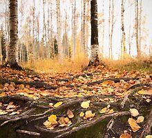 Autumn by Sandra Kemppainen