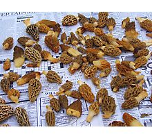 Morel Mushrooms  (Part of Last Years Harvest) Photographic Print