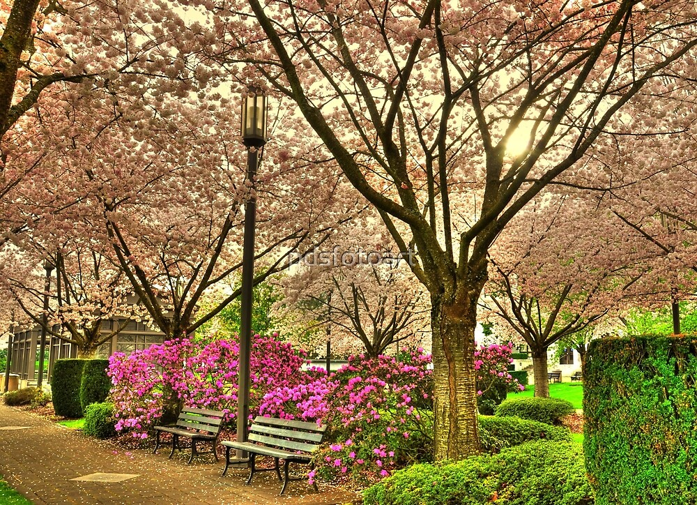 Spring day at the State Park Salem Oregon by pdsfotoart