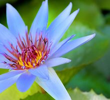 Blue Flower by Paula Bielnicka