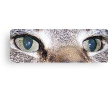 Cats Eyes Canvas Print