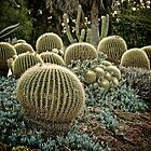 Cactus at Sunset by boehmgraphics
