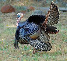Thomas the Turkey by Lenny La Rue, IPA