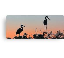 Great Blue Heron - The Rookery Canvas Print