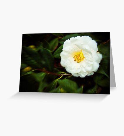 White Bright Greeting Card