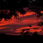 Red -  the sky is red.........! by Roy  Massicks