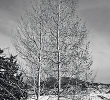 Aspens in Winter by Bryan Peterson