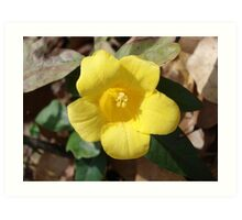 Carolina Jessamine Art Print