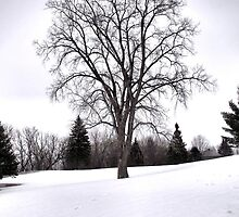 Tree in Landscape, Early Spring with Snow  by HappyArtSpirit