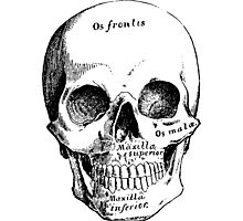 Science, Skull Diagram Drawing Photographic Print