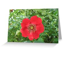 Colour me scarlet! Wild Rose and Buds Greeting Card