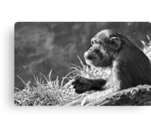Chimpanzee Profile Canvas Print