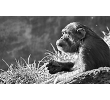 Chimpanzee Profile Photographic Print