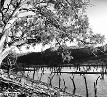 On the banks of the Murray River by RalphOlsson