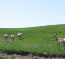 Antelope Butts Sticker