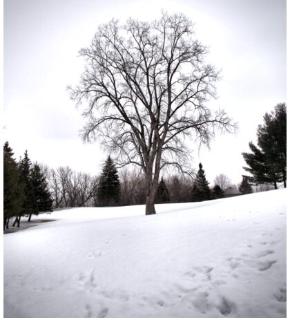 Tree in Landscape Early Spring Snow Sticker