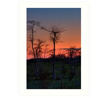 Sunset at Big Cypress National Preserve, Florida Art Print
