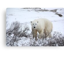 Polar Bear in the Arctic Willow Canvas Print