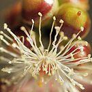 ~Seed Pods~ by Debra LINKEVICS
