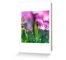 Windowbox.  Greeting Card