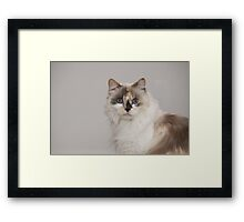 Mia my Kitty Framed Print