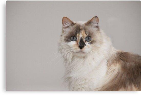 Mia my Kitty by Kimberly Palmer