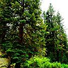 Sequoias by HeavenOnEarth