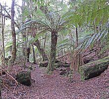 Julius River Forest Reserve Walk, Tasmania (2) by Margaret  Hyde