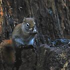 Little Squirrel  by kitkat55555