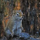 Little Squirrel Number 2 by kitkat55555
