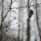 Withered Winter Plant by kitkat55555