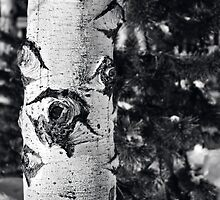 Aspen in Black and White by Bryan Peterson