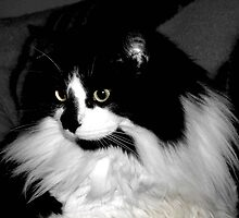 black and white cat by Barry W  King