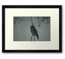 Hunting Owl Framed Print