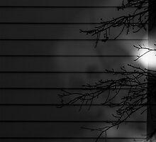 Peek-A-Boo by Bonnie Blanton