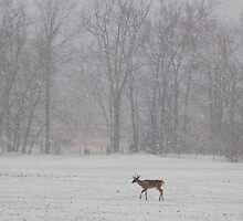in the snow by dc witmer