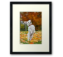 Pup standing up Framed Print