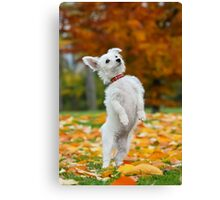 Pup standing up Canvas Print